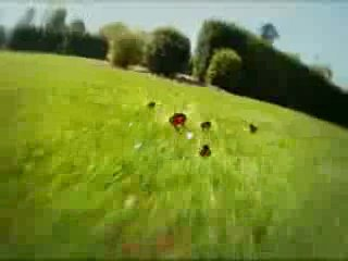 Время видео ролика 000440. Мультик про божью коровку .